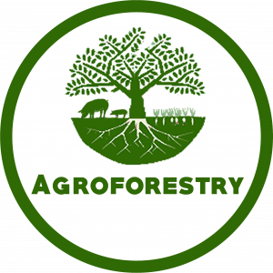 Agroforestry by Great Southern Forestry