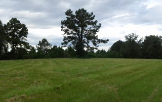 Conservation Oriented Land Management by Great Southern Forestry