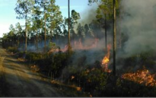 Prescribed Burns Conservation Oriented Land Management by Great Southern Forestry