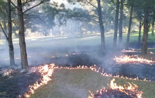 Controlled Burns Conservation Oriented Land Management by Great Southern Forestry